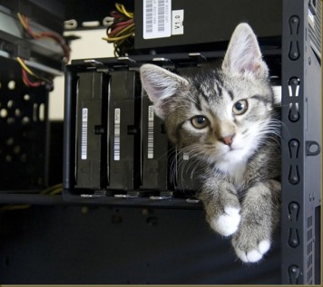 """Oh, hai guyz!  I'm Whiskers, the IT Kitten.  Ur entire future will b deetermind by which wirez I choo on."""